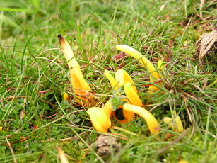 GoldenSpindles_Ulverscroft_5Nov04