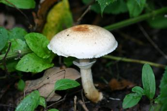 WoodMushroom_burbage_22Oct05