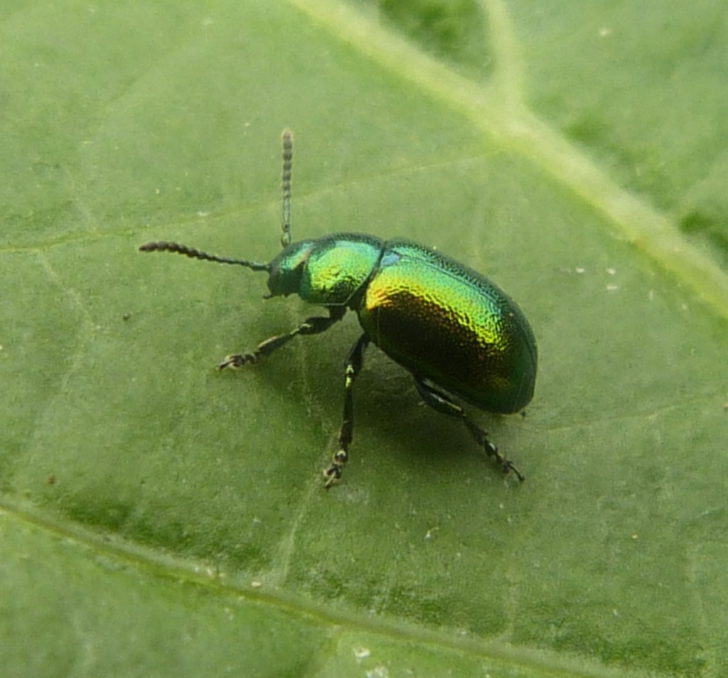 Insect ID | Department of Entomology