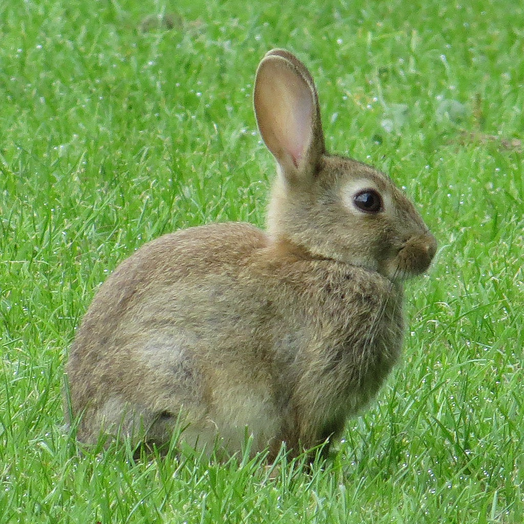 Sandy Stanton And The Singing Strings You Have A Face / You Have A Face