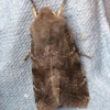 Orthosia incerta | Clouded Drab