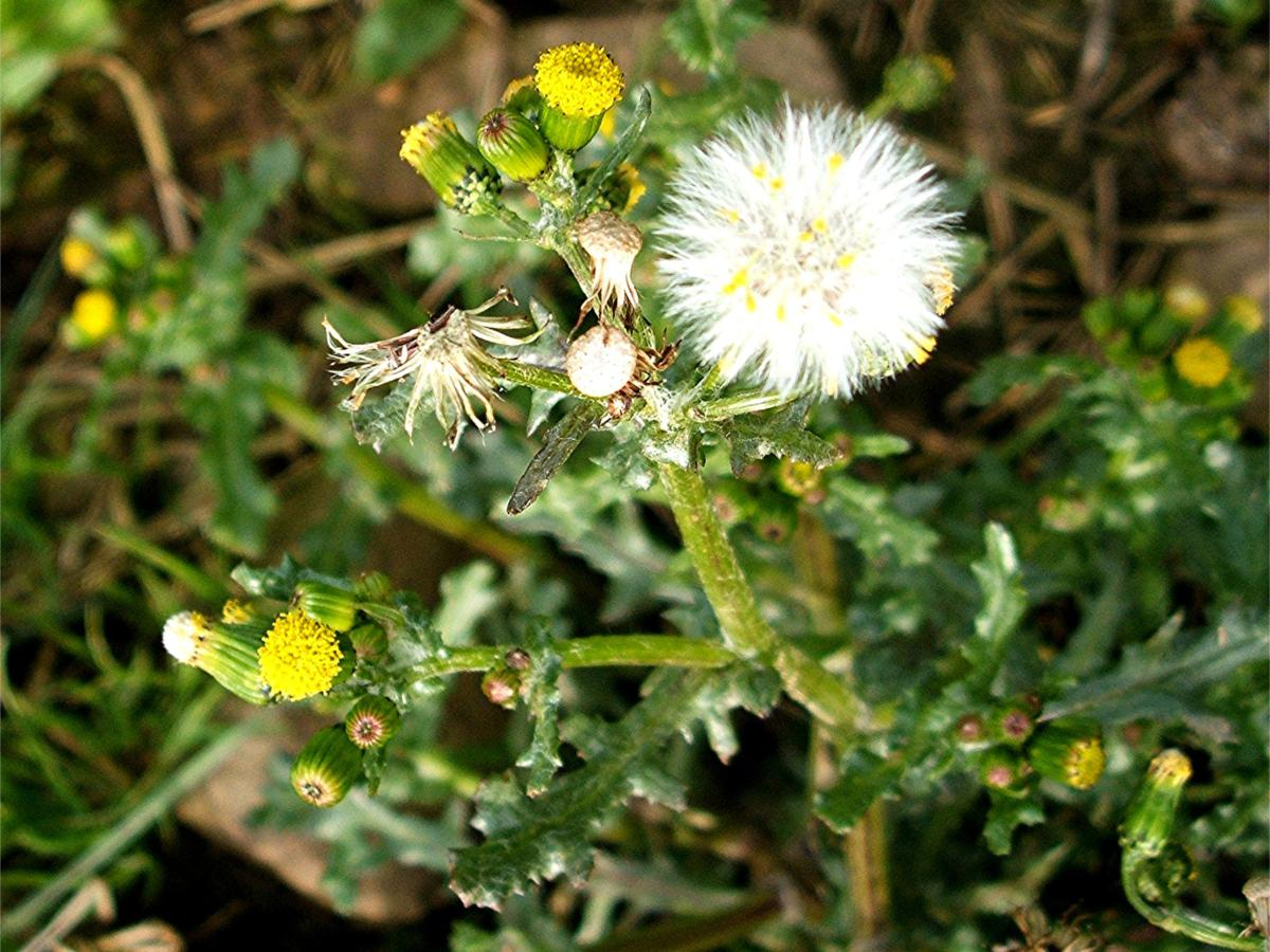 map of lax jpg with Groundsel on 9381120076 further Guide Los Angeles Zoo Botanical Gardens in addition Gateway image Hyatt Place Los Angeles LAX El Segundo P033 Bar 1280x720 moreover Gallery together with 6187997000.